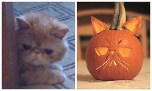 Happy National Pumpkin Day!